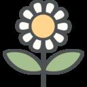 Flat Daisy