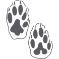 Animal Paws Glyph Icon