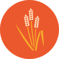 Colorful Autumn Grain Icon