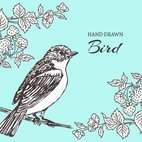 Small 1x hand drawn bird