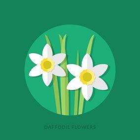 Flat Daffodil Flowers