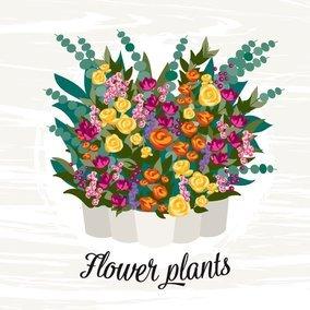 Flower Plants Illustration