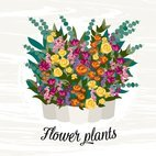 Small 1x flower plants illustration