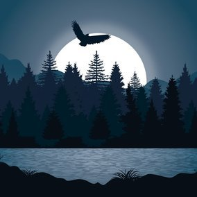 Beautiful Night Forest Illustration