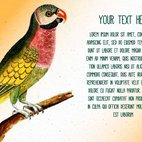 Small 1x dd vintage bird text template 99834 preview