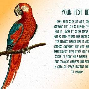 Vintage Parrot Text Template