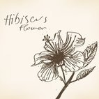 Small 1x hibiscus flower drawing