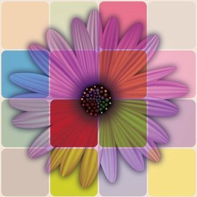 Colorful Daisy Flower