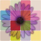 Small 1x colorful daisy flower