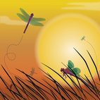 Small 1x dragonfly sunset background