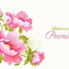 Small 1x pink watercolor peonies vector illustration